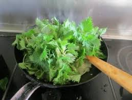 cuisiner l ortie 4 raisons pour utiliser l ortie une plante médicinale