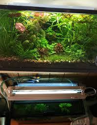 lights of america self ballasted l aquarium lights lighting which to choose fish beginner