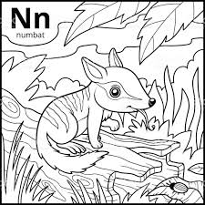 wildlife coloring book coloring book colorless alphabet letter n numbat stock vector art