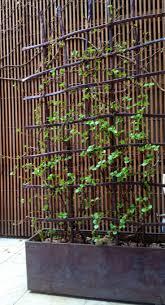 12 best pergolas canopies trellises screens images on pinterest
