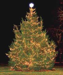 recycle your christmas tree in new hanover county wilmington