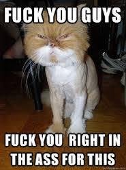 Fuckyou Meme - fuck you guys cat meme cat planet cat planet