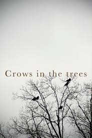 crows in the trees photos and migraines