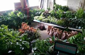 there u0027s a big ol u0027 indoor plant sale on this weekend melbourne