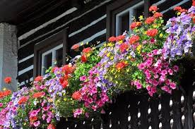 Climbing Plants For North Facing Walls - 5 common balcony gardening problems and tips to solve them