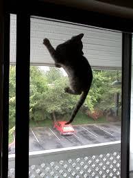 cat doors for glass doors sliding glass cat door choice image glass door interior doors