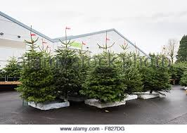trees on sale in camden town stock photo