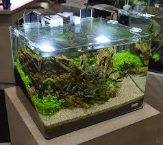Nano Aquascape Freshwater Tanks Of The Aquatic Experience 2016 Part 2