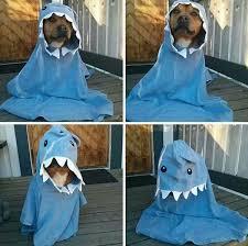 Dog Shark Halloween Costume Awesome Halloween Costumes Pets
