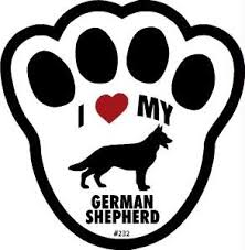 australian shepherd 6 monate fell 29 besten panda german shepherd bilder auf pinterest deutsch