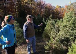 south jersey christmas tree farms prepare for holiday rush news