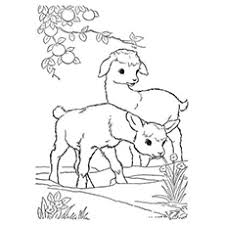 free coloring pages goats 25 free printable goat coloring pages online