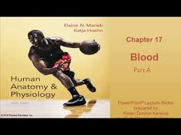 Chemistry In Anatomy And Physiology Best Anatomy And Physiology Videos Page 2 10 Best Human Anatomy