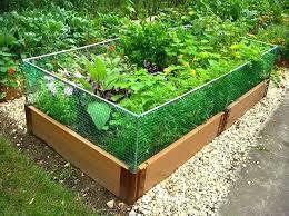 raised vegetable garden beds masters raised vegetable garden beds