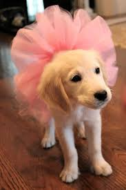 halloween background puppys top 25 best puppies in costumes ideas on pinterest dogs in