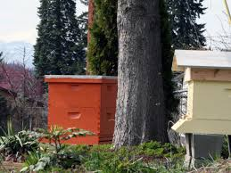 How To Make A Top Bar Beehive Beekeeping Methods Top Bar Hives Diy