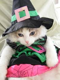 Halloween Kitty by Halloween Kitties