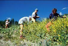 cuisine sauvage couplan plantes sauvages comestibles et médicinales stages programme à