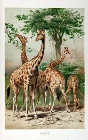 antique giraffe ring holder images 21 best giraffe birthday cards images happy jpg