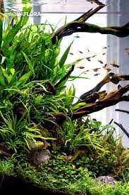 Aquascape Aquarium Plants Best 25 Freshwater Aquarium Plants Ideas On Pinterest