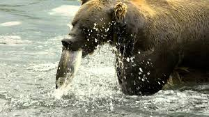 woolly mammoth siberia video information u0026