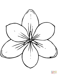 magnolia coloring page free printable coloring pages