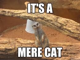 Mere Cat Meme - it s a mere cat meerkat quickmeme