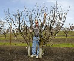 1932 best fruit trees for small spaces images on