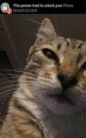 Sneaky Cat Meme - sneaky bastard i 3 cats pinterest funny farm humour and memes