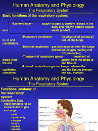 Nose Anatomy And Physiology Human Anatomy And Physiology Lung Respiratory System
