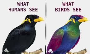 Bird Vision Uv Light And Cameras Album On Imgur