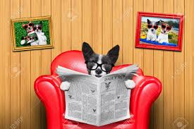 terrier dog reading newspaper on a red sofa couch or lounger