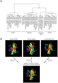 a widely employed germ cell marker is an ancient disordered
