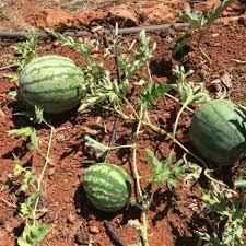 kitchen garden design ideas how to start kitchen garden starting a raised vegetable garden