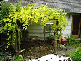backyards trendy grape vine trellis 13 with 29 building a