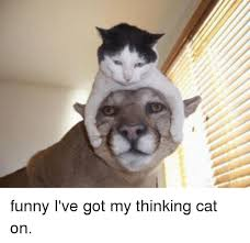 Thinking Cat Meme - funny i ve got my thinking cat on cats meme on me me