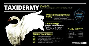 how to become a taxidermist theartcareerproject com