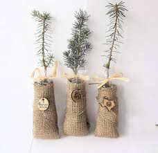 Planting Christmas Tree Seedlings 25 Green Tree Seedling Wedding Favors Personalized Favor Tags By