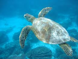 the fact files how do you find out why a sea turtle has epileptic