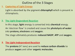 What Happens During The Light Dependent Reactions Of Photosynthesis During The Light Dependent Reactions In Photosynthesis Energy Is
