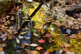autumn leaves reflections foliage free nature pictures by