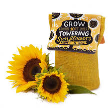 Unique Cooking Gifts Unique Sunflower Gifts Uncommongoods