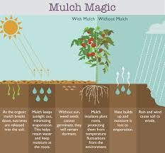 Best Type Of Mulch For Vegetable Garden - what to do when weeds have taken over your garden