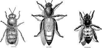 honey bee art free download clip art free clip art on