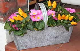 Winter Container Garden Ideas Gardening Gardening Guides Techniques Ideas For