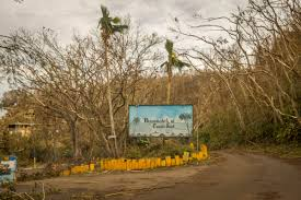 nc native plant society nc native describes destruction in puerto rico wfae