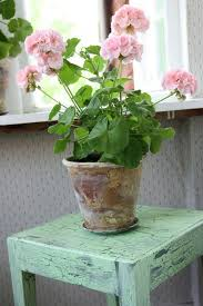 Indoor Fragrant Plants - 17 best flowering houseplants balcony garden web