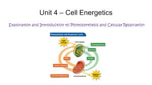unit 4 u2013 cell energetics exploration and introduction to