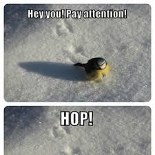 Pay Attention To Me Meme - hey pay attention by clairvoyant meme center