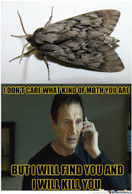 Moth Meme - whenever i notice a moth flying in my house by unknownjedi meme